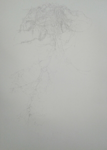 pomegranate drawing1